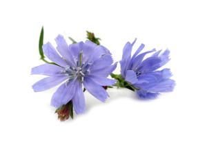 fleur de Bach 8