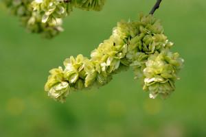 fleurs de Bach 11