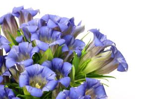 fleurs de Bach 12