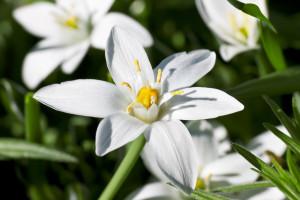 fleurs de Bach 29