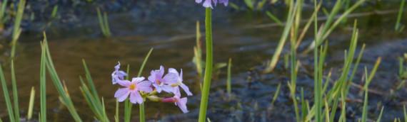 Les fleurs de Bach Water violet vous apportent un soutien psychologique efficace!