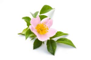 fleurs de Bach 37