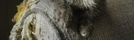 Comment fonctionne l'adaptation au chat des élixirs floraux du Docteur Bach?