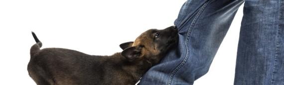 Qu'est-ce que les fleurs de Bach pour un chien jaloux ?