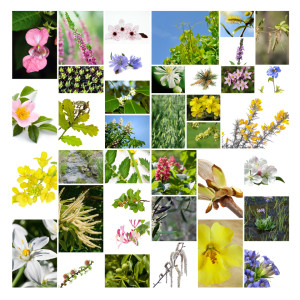 liste des fleurs de bach
