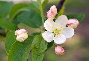 la-fleur-de-bach-10